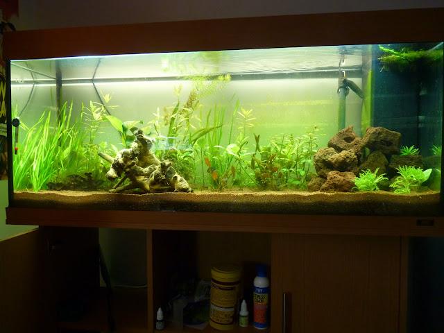 Ma petit histoire Aquariophile de 2009 à aujourd'hui  P1020594
