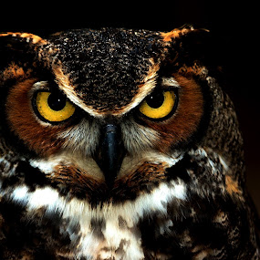 by William Bentley Jr. - Animals Birds