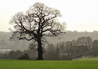 Winter Tree II, Haresfield, Berkhamsted