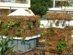 fabricant de murs et toitures végétales
