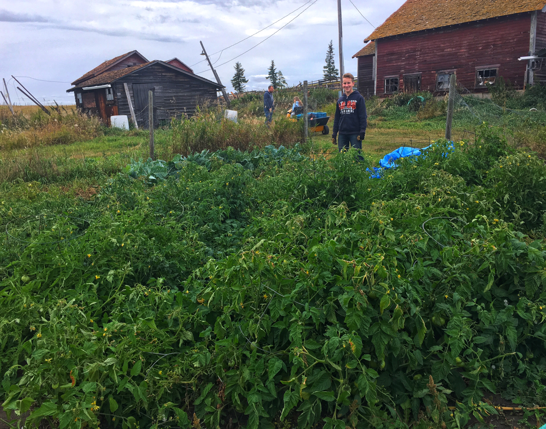 JBean with some of or tomato plants.