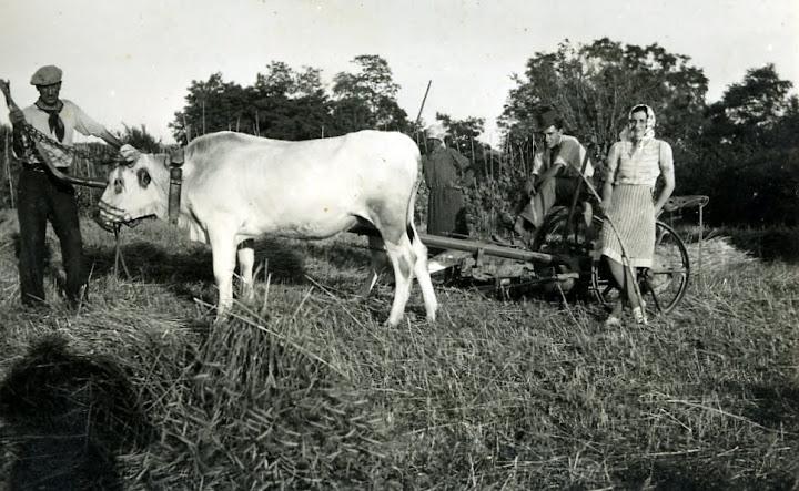 1943 - finu, silia, cecu frugg, ruseta, al pianburi, 27 giugno