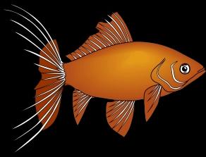 fisk050.png?gl=DK