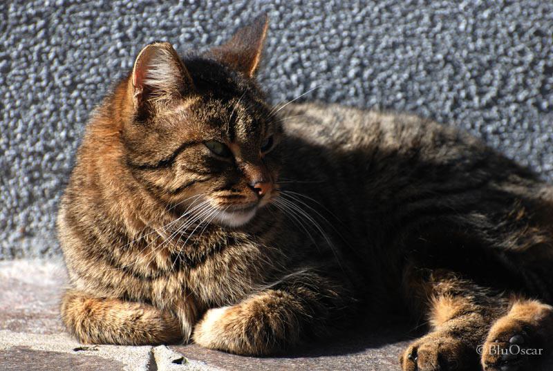 Gatti veneziani 24 02 2011 N 13
