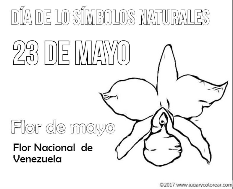 [flor+de+mayo+venezuela%5B2%5D]