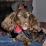 Nanette Parris's profile photo