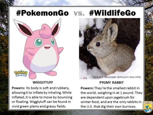 pokemongo-vs-wildlifego-8