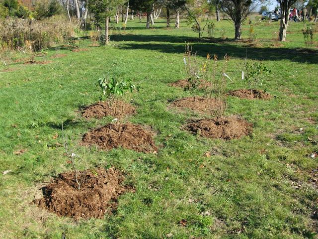 Hammo Planting - Shannon Schiesser - IMG_4955.JPG