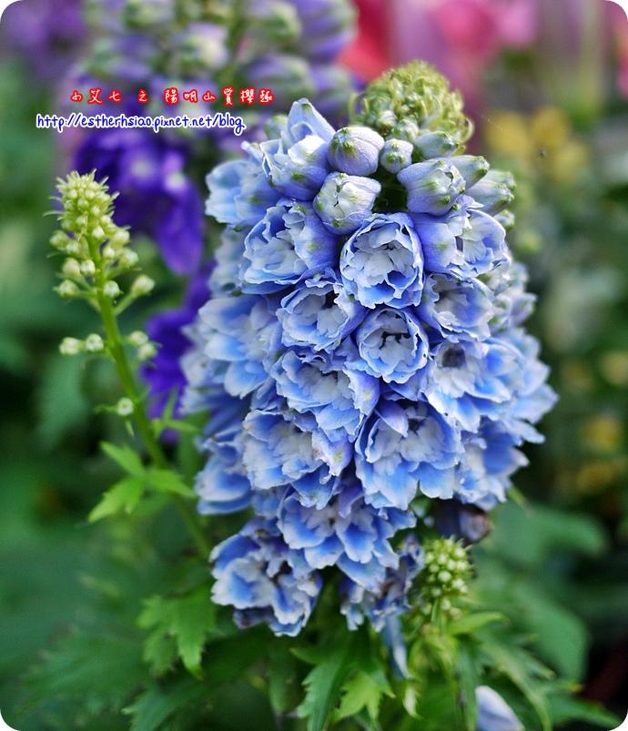 49 不知名花