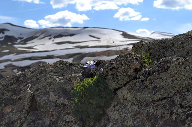 a rocky flower
