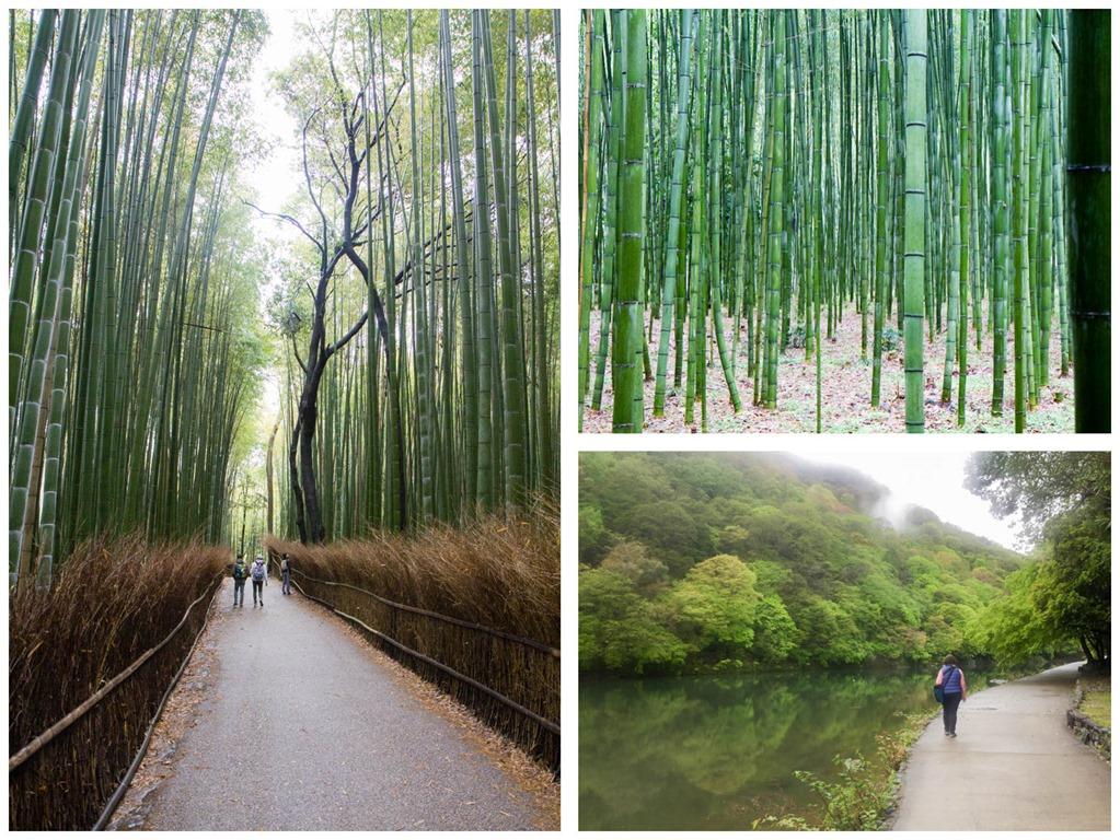 [bamboo%5B4%5D]