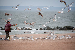 It isn't hard to find 'Gull Man' at Coney Island in the winter. Just look for the flock of hundreds of seagulls.