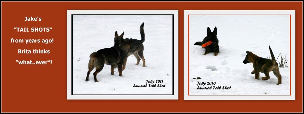 [Jake+Tail+shots%5B4%5D]