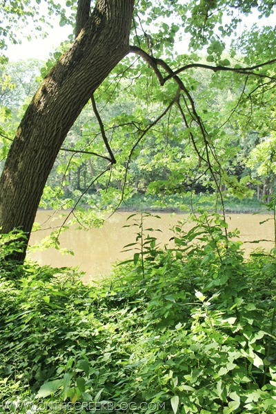 River scene with tree