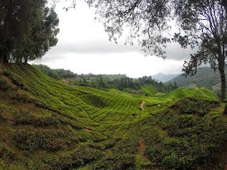 1. Malaisie - CAMERON HIGHLANDS
