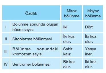 mitoz ve mayoz bölünmeye ait özellikler