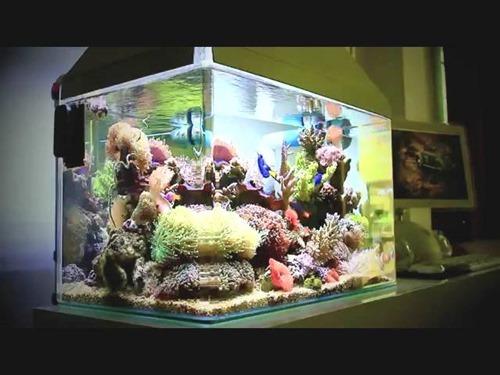 choosing-my-first-fish-tank-(1)