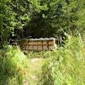 di chuyển trại ong qua lào