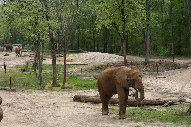 Zoo Snooze 2015 - IMG_7279.JPG