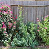 Gardening 2011 - 100_9326.JPG