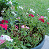 Gardening 2013 - 115_5459.JPG