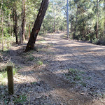 int of Walkers ridge forest road (58754)