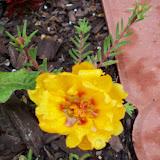 Gardening 2010 - 101_1582.JPG