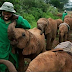Have you seen an Elephant Orphanage before?