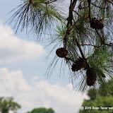 06-15-14 Memphis TN Suburban Park - IMGP1404.JPG