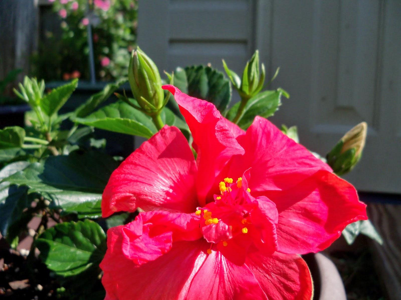 Gardening 2014 - 116_1543.JPG