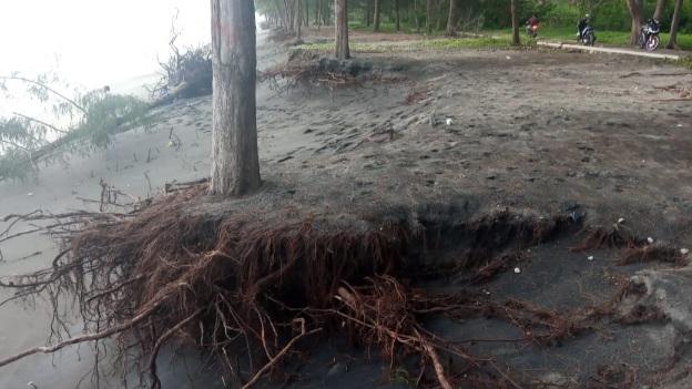 Desa Wisata Kuranji Hilir Berduka! Lagi-lagi Abrasi Habiskan 2 Baris Pohon Aru di Sepanjang Pesisir Pantai Baselona