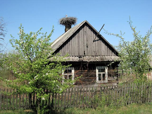 гнездо аиста на крыше дома