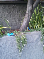 Bagged poo thrown into waist-high raised flower beds. Castro, San Francisco CA, 94114