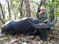 Nice buffalo bull taken by Mr Fullam, USA with a double rifle.