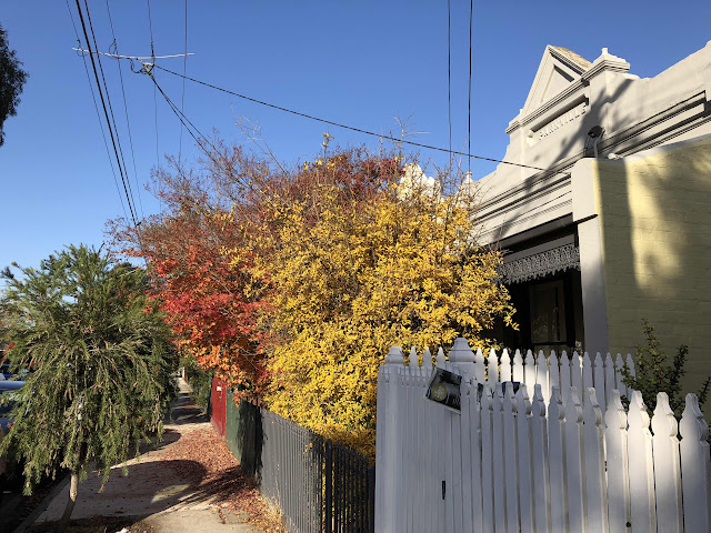 Autumn/Fall colours in Melbourne are glorious!