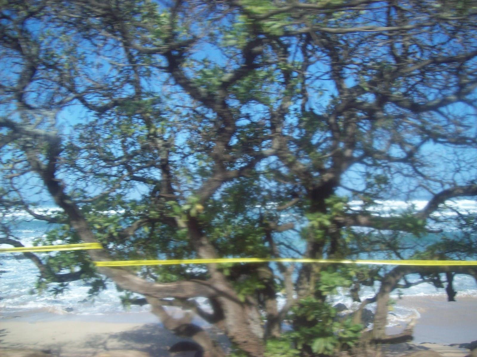 Hawaii Day 3 - 100_6996.JPG