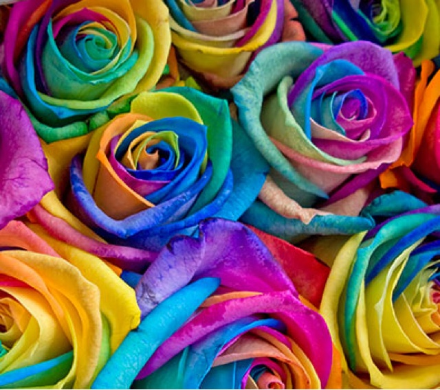 Fleuriste isabelle feuvrier les roses rainbow for Where to find rainbow roses