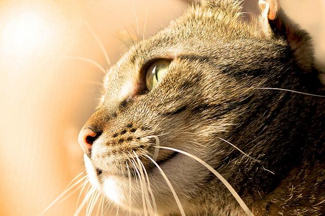 Cat 1113412 640