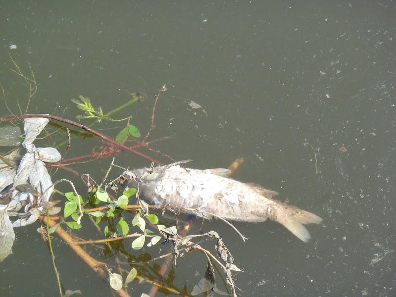 как рыба в воде