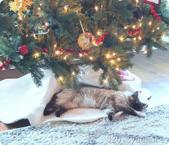 gatito under tree