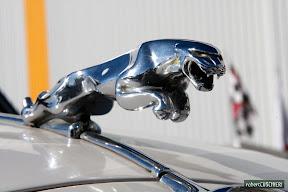 Jaguar bonnet ornament