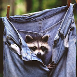 Hanging Out, Raccoon.jpg