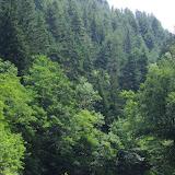 Chemin de La Rodé, 620 m, Cocurès (Lozère), 6 août 2013. Photo : J.-M. Gayman