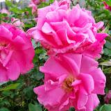 Gardening 2014 - 116_1506.JPG