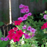 Gardening 2011 - 100_9180.JPG