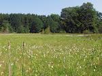 Ryegaard Dyrehave - lokalitet for Moseperlemorsommerfugl.jpg