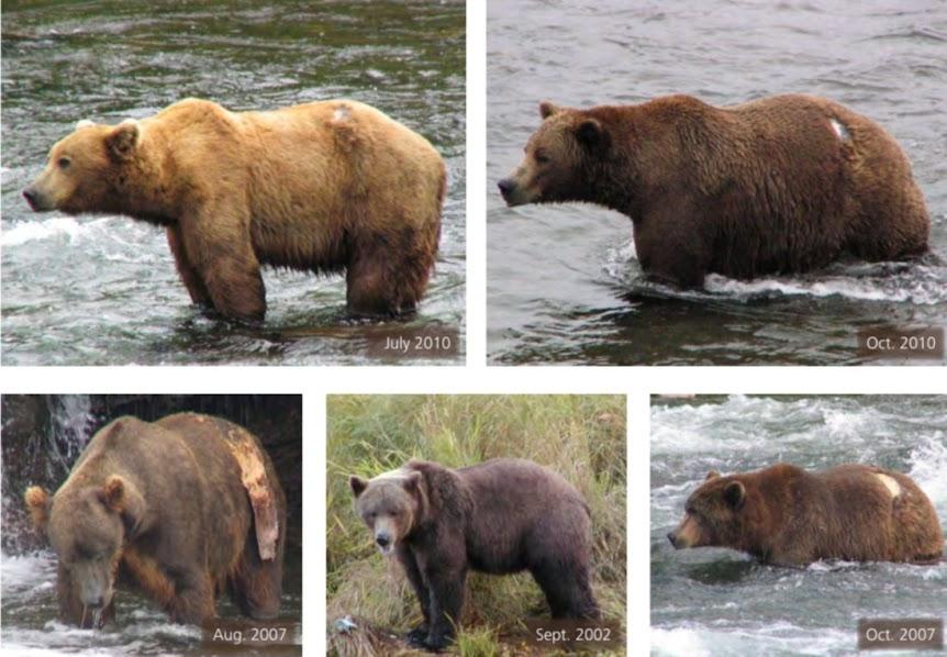 Urso pardo vs Urso polar - Página 2 26514020759751212830