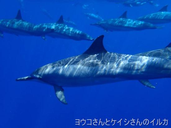 ケイシさんとヨウコさんのイルカの写真