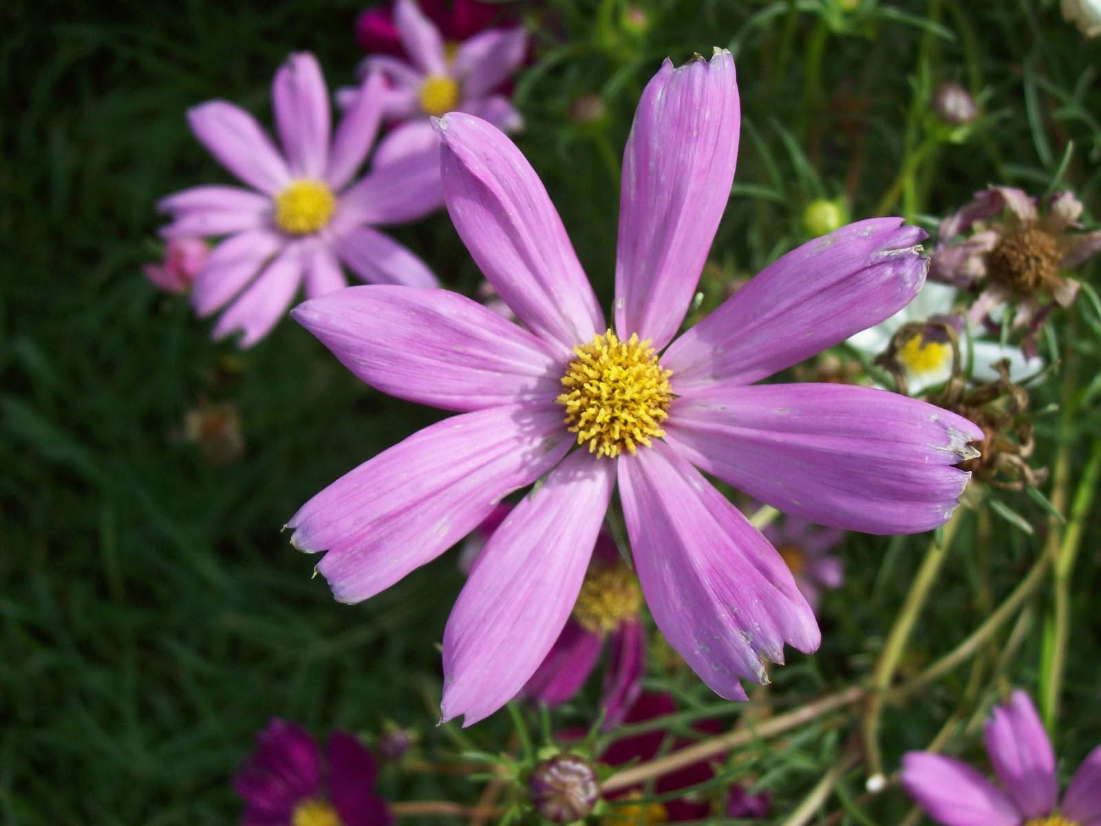 Gardening 2009 - 101_4492.JPG