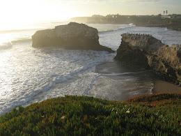 Natural Bridges Park, Santa Cruz.